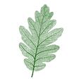 oak leaf isolated vector image