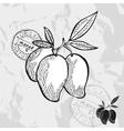 Hand drawn decorative mango vector image