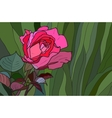 Rose stained glass window vector image vector image