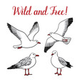 set with seagulls on isolated white background vector image