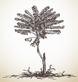 Sketch of small tree vector image
