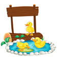 Three ducklings swimming in the pond vector image vector image