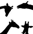 giraffes black silhouette on white background vector image