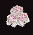 three hand drawn gently pink peony flowers vector image