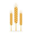 golden organic bread spikes isolated vector image