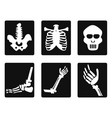 x ray icons vector image vector image