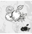 Hand drawn decorative apples vector image