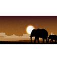 Elephant family sunset vector image