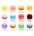 macaron flavors vector image
