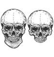 set of human skulls isolated on white background vector image