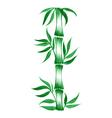 decorative ornament bamboo vector image vector image