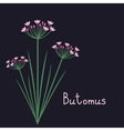 Butomus plant vector image