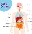 bodyorgans vector image