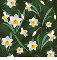 Seamless background from narcissus vector image