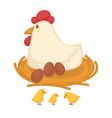 hen sitting eggs and chicken hatch on nest farm vector image