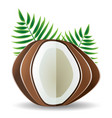 coconut palm leaves vector image