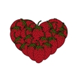 modern strawberries in a heart on white vector image