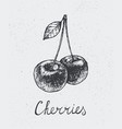 hand drawn cherries engraving style hand vector image
