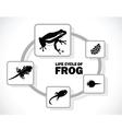frog life cycle vector image