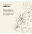 Branch of Chrysanthemum vector image vector image