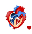 design love human heart in and out vector image