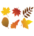 fall leaves vector image vector image