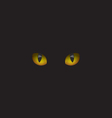 Cat eyes in the dark vector image