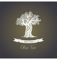 Foliage of olive oil tree in mediterranean greece vector image