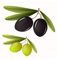 Green and black olives with leaves vector image