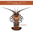Spiny Lobster Marine Food vector image