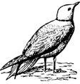 bird rhodostethia rosea vector image vector image