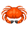 red crab isolated of seafood on vector image vector image