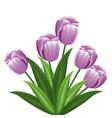 purple tulip flowers decoration vector image