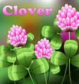 Blooming pink flowers on green field clover meadow vector image