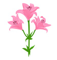 lily color vector image