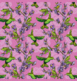 seamless pattern colibri birds and flowers on vector image