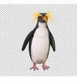 macaroni penguin on transparent background vector image