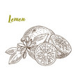 lemons slice and flower hand drawn vector image