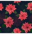 Poinsettia flower background for invitation card vector image