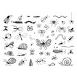 set of hand drawn insects or small animals sketch vector image