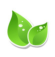 water drops on green leaf of a tree a vector illus vector image