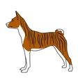 Brindle basenji dog standing vector image