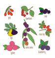 colored hand drawn botanical food set vector image