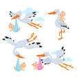 cartoon flying storks and stork birds carrying vector image