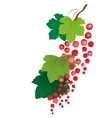 Currant vector image