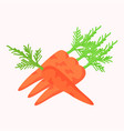 carrots with green leaves isolated on white vector image
