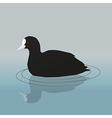 Common coot vector image