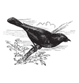 Summer Tanager vintage engraving vector image vector image