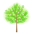 vector stylized tree vector image