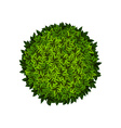 Round green bush vector image